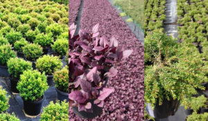 Selecting Plants is easy with our comprehensive product information