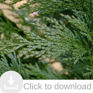 Andreasens Green Tubestock, shrubs, grasses, trees