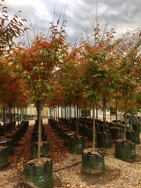 Zelkova Serrata Green Vase Andreasens Green Wholesale
